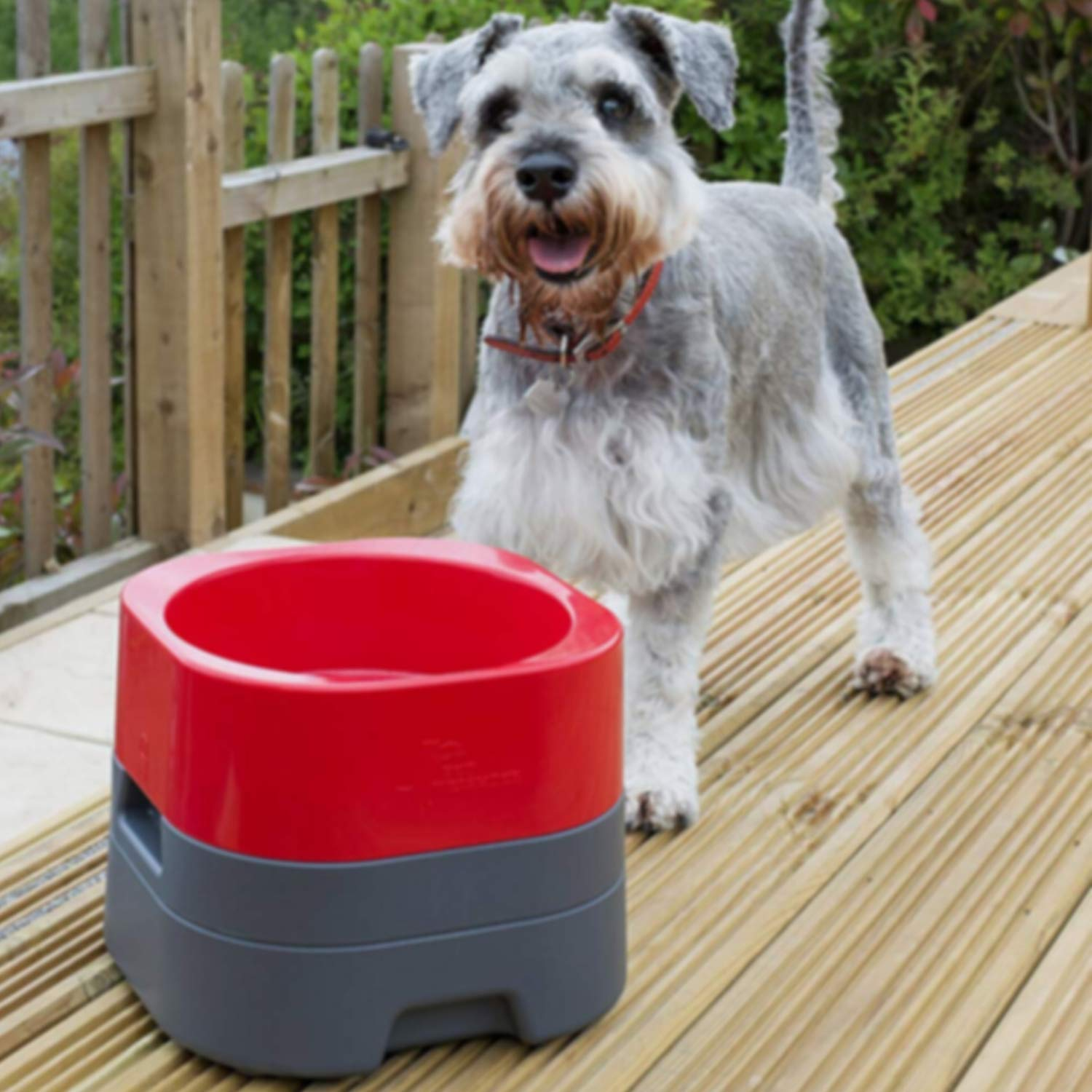 Buy The Double Diner Dog Bowls Online At Low Budget