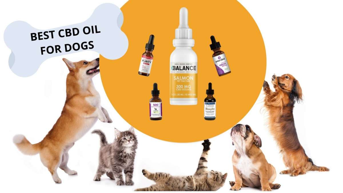 Drawbacks and side effects of Best cbd oil for dogs