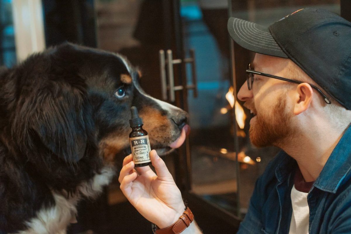 Best cbd oil for dogs provides long term pain relief